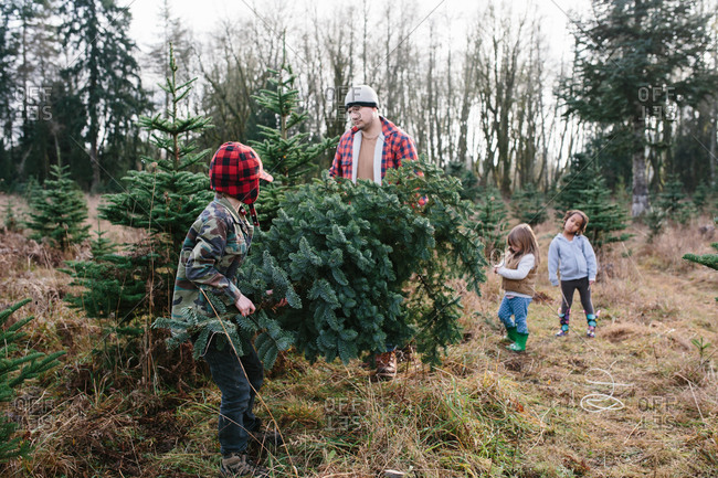 Father and son carrying Christmas tree they cut down