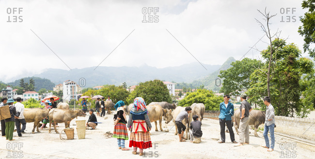 Bac Ha, Vietnam - May 9, 2015: Buyers and sellers mingle around prized water buffalos for sale at Bac Ha Market