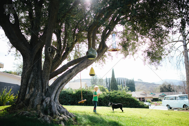 Boy playing with dog under tree