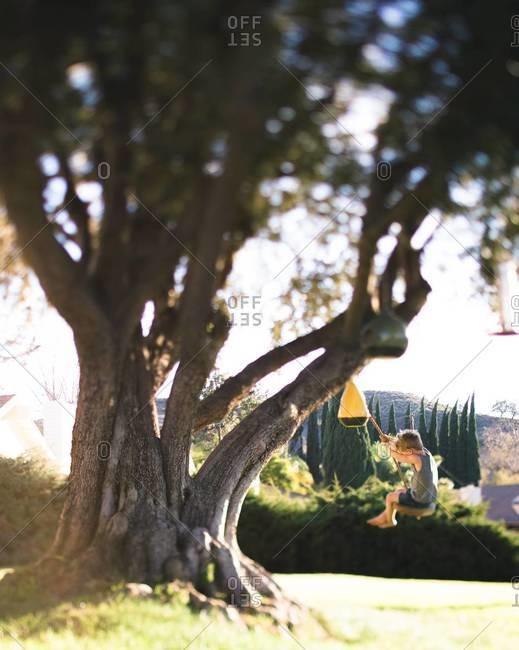 Boy on a tree swing in front yard