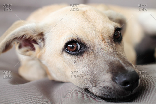 Dog lying down, portrait