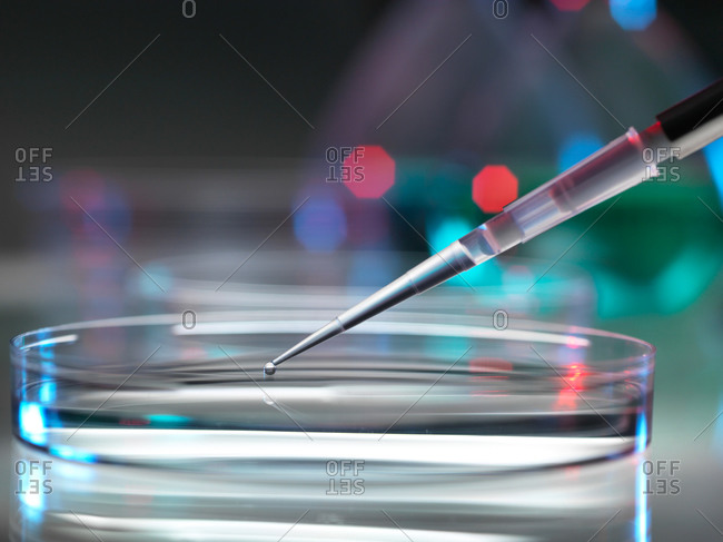 Pipetting sample into petri dish