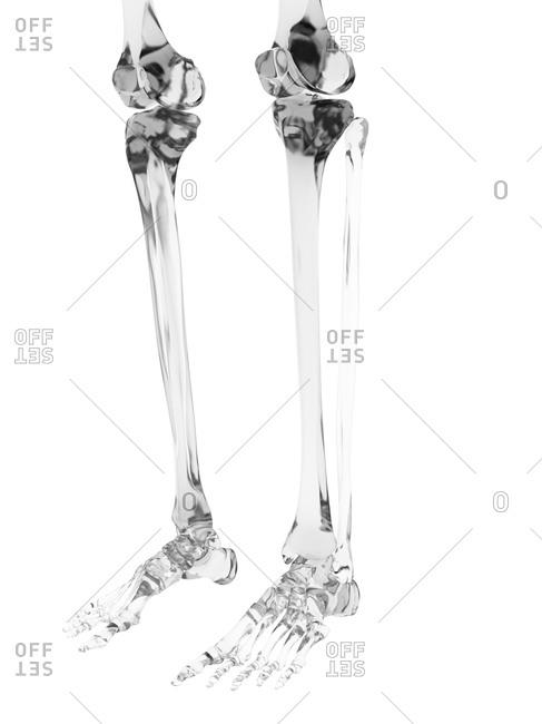 Human leg bones - Offset Collection