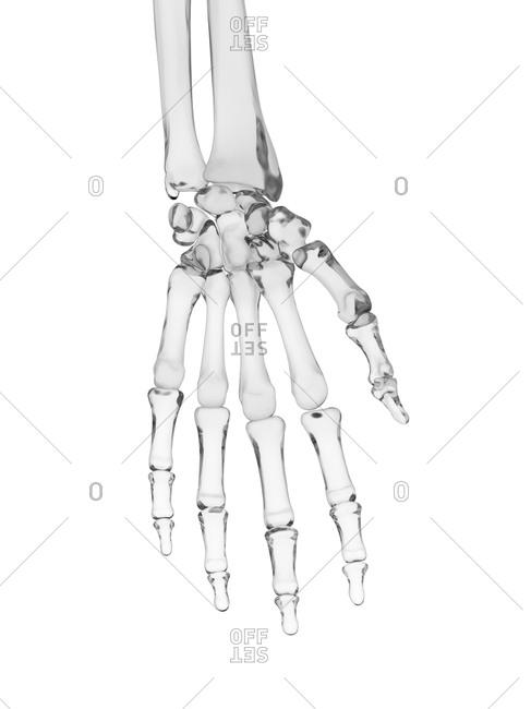 Human hand bones - Offset Collection