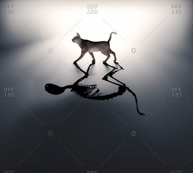 Schrodinger's cat, conceptual illustration