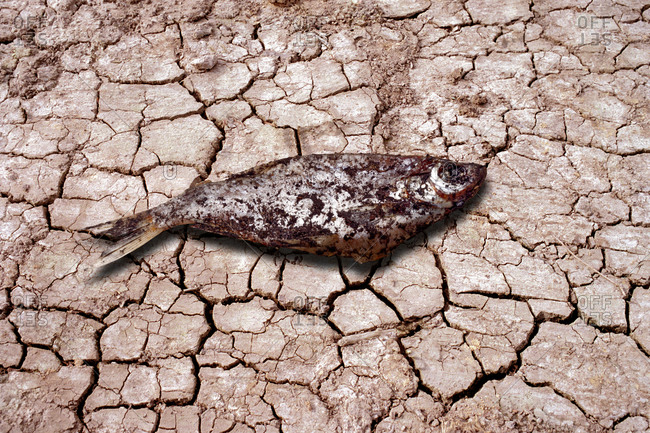 Dead fish on cracked earth, computer artwork