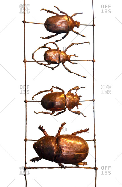 Beetles in a row, computer artwork