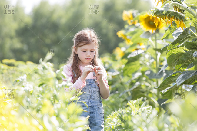 Girl in sunflower field