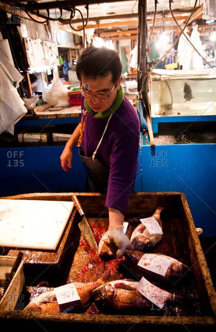 Tsukiji Fish Market - May 5, 2011: Man grabbing fish to cut at the Tsukiji Market