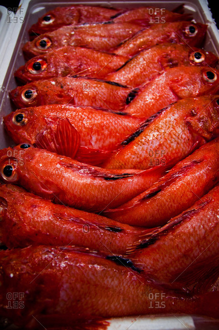 Tray filled with red mackerel fish