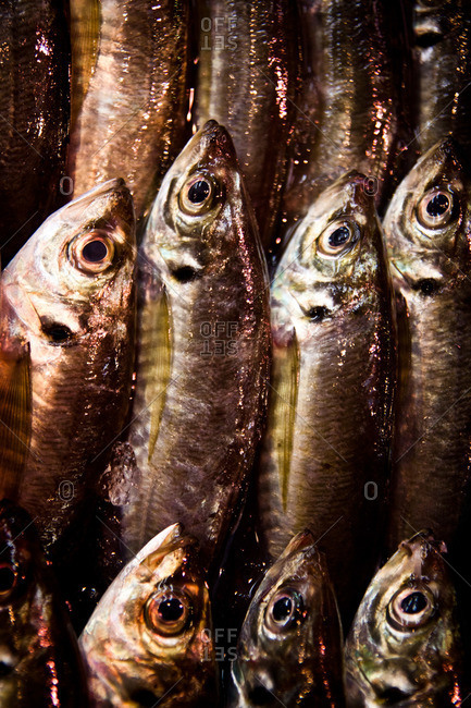 Close up of sardines in an Asian fish market