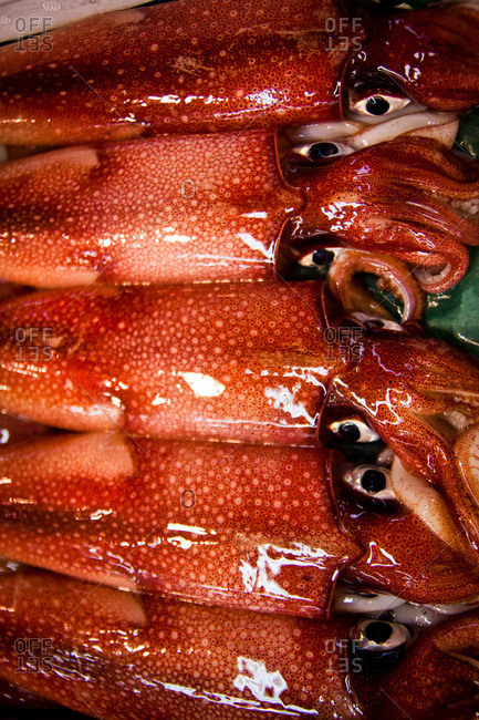 Squid on display at an Asian fish market