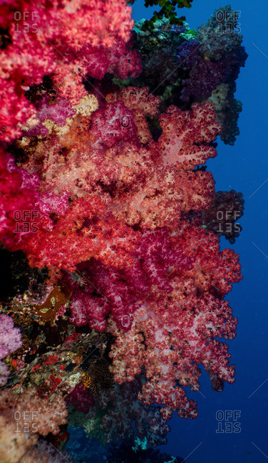 Colorful reef scene with soft corals