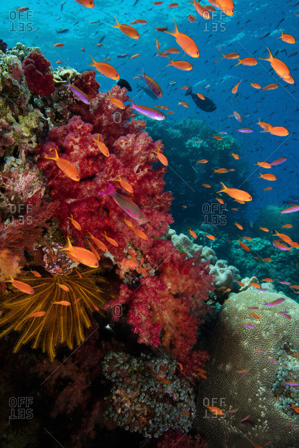 Biodiversity of a coral reef in Fiji