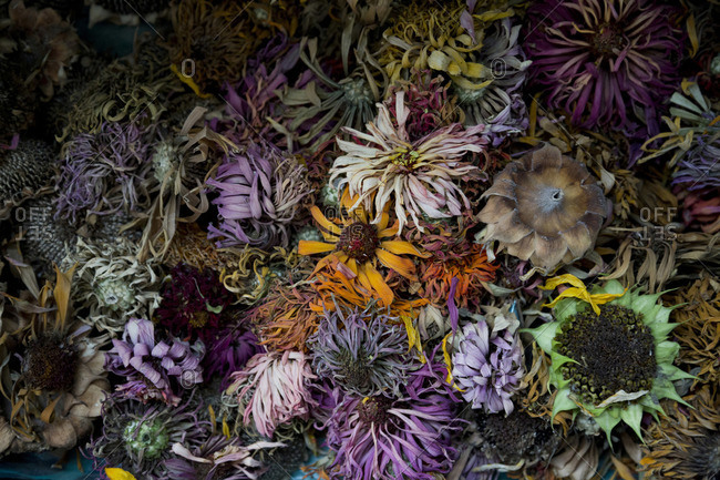 Colorful dried flower heads
