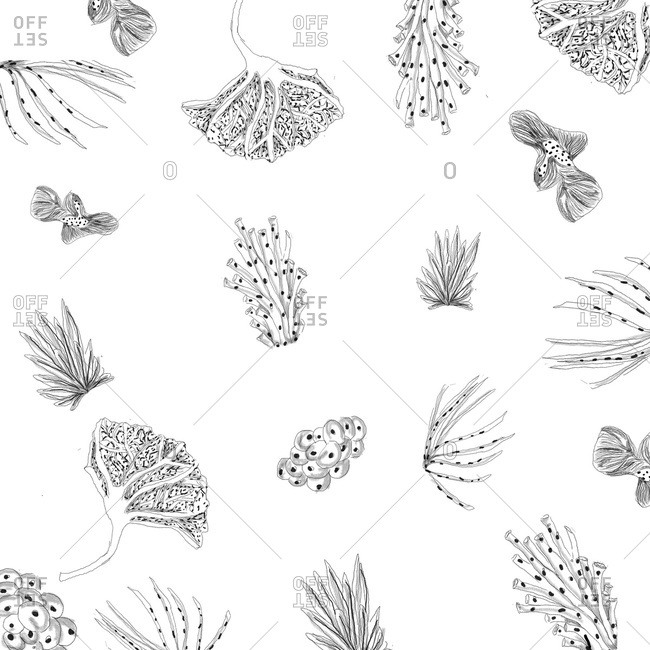 Pattern of underwater plants