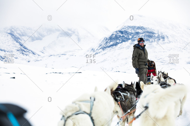 Smiling man standing near draught dogs