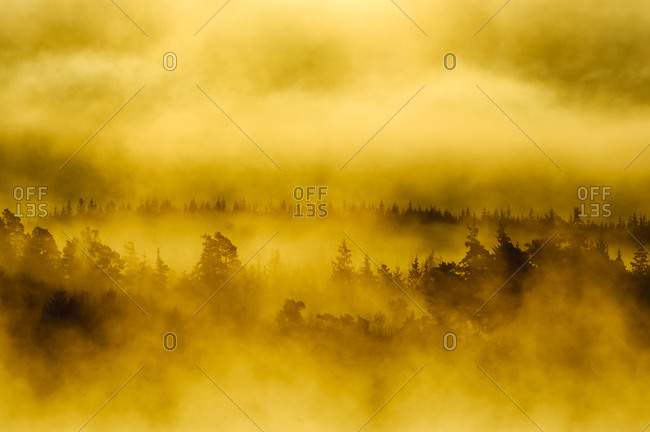 Forest in fog - Offset Collection