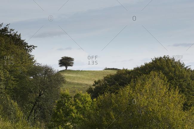 Tree on hill, Osterlen - Offset