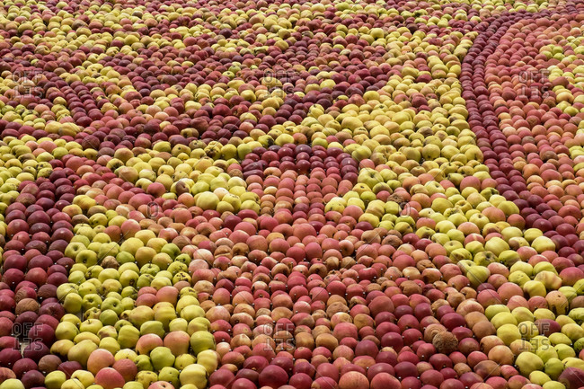 Pattern made out of apples