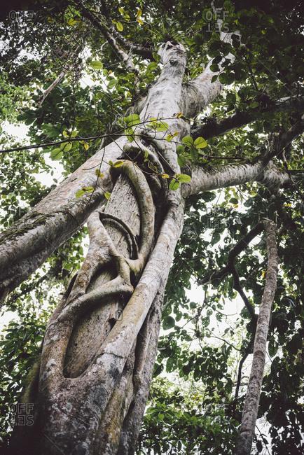 Sacred tree in Ecuador
