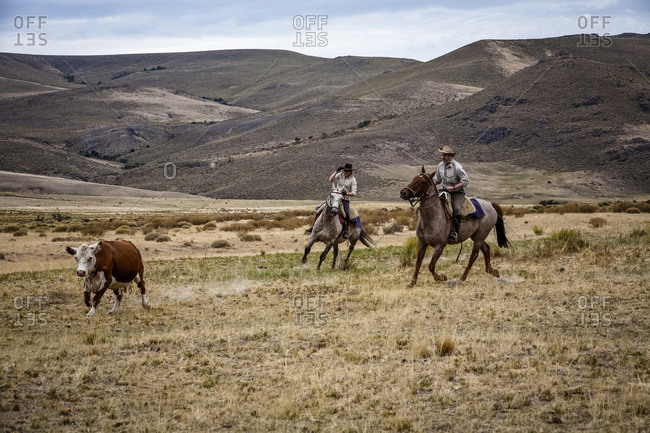 Patagonia, Argentina - February 24, 2012: Tourists and gauchos with cattle at the Huechahue Estancia, Patagonia, Argentina