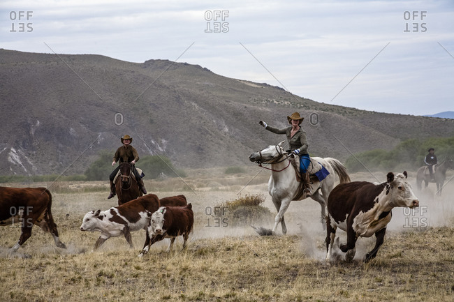 Patagonia, Argentina - February 24, 2012: Tourists and gauchos rounding up cattle at the Huechahue Estancia, Patagonia, Argentina