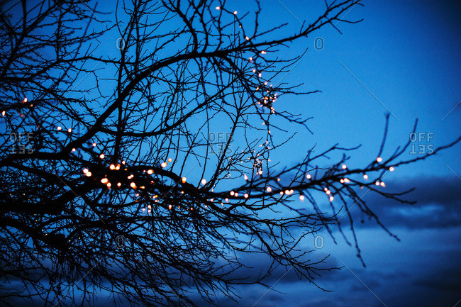 Fairy lights in a tree branch