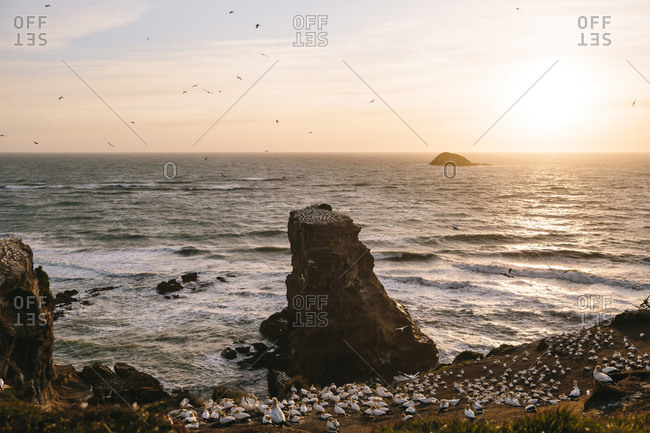 Seabirds by rock formations