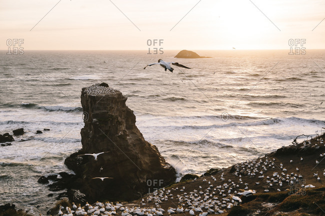 Seabirds gathering by rock formations