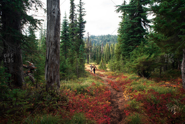 Hikers on a colorful trail through a forest