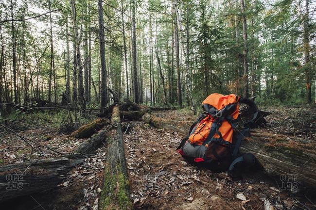 Orange backpack in forest