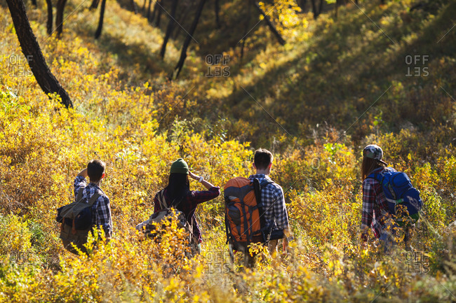 Rear view of friends hiking in forest during autumn