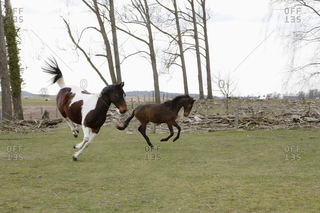 Horses jumping on field