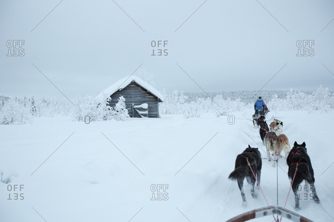 Rear view of sled dogs on snowcapped landscape against sky