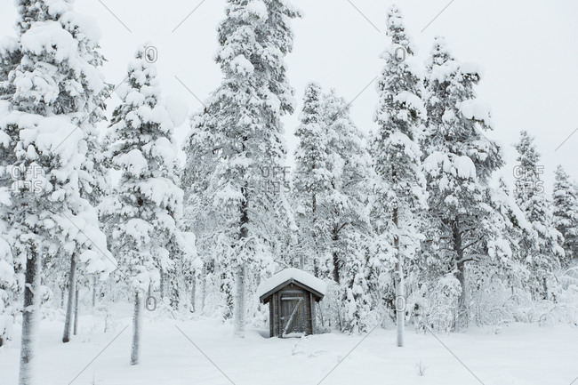 Wooden shed surrounded snow covered trees