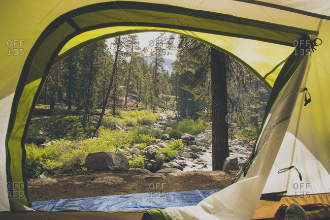 View of trees through tent