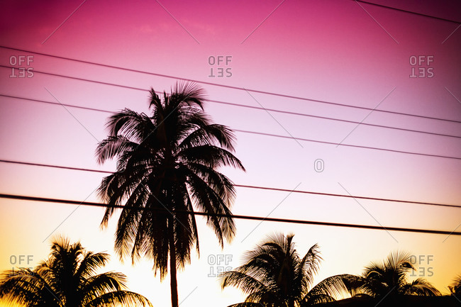 Silhouette palm trees and power lines against sky during sunset