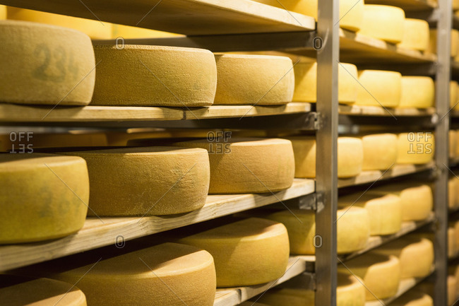 Cheese arranged on shelves at factory