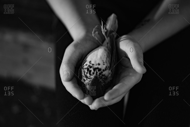 Dead bird cupped in girl's hands