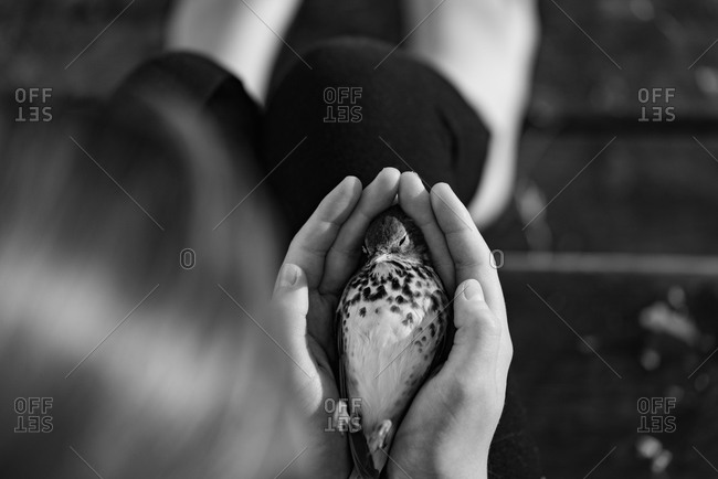 Dead bird in girl's hands