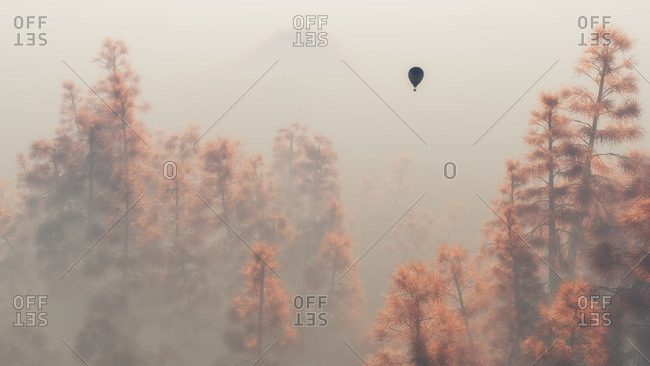 Hot air balloon flying between autumn pine trees