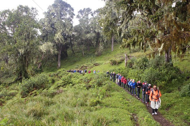Mount Meru, Tanzania - August 21, 2013: Hikers, porters and guides on their way to Mount Meru, a mountain in Arusha National Park in Africa, near Mount Kilimanjaro