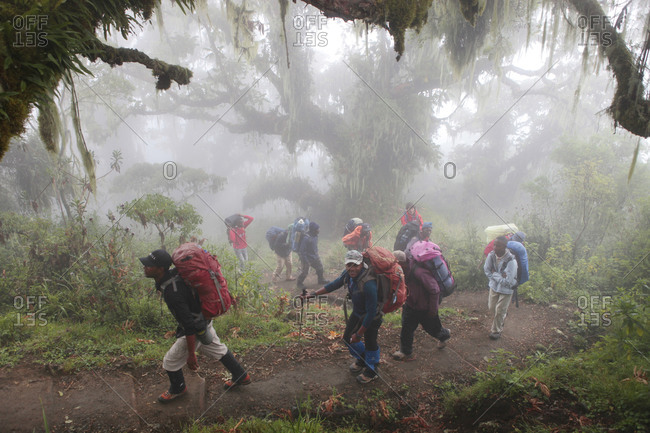 Mount Meru, Tanzania - August 21, 2013: Hikers, porters and guides walking in a mystical rain forest on their way to Mount Meru, a mountain in Arusha National Park in Africa, near Mount Kilimanjaro