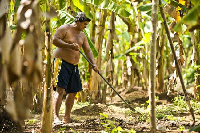 Costa Rica - June 15, 2015: A banana farmer raking his property in Costa Rica