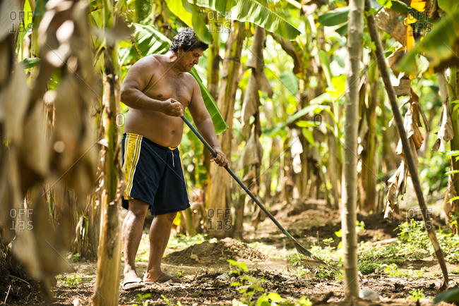 Costa Rica - June 15, 2015: A banana farmer raking his property in Costa Rica