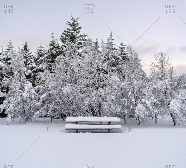 Snow-covered picnic table and trees in Iceland