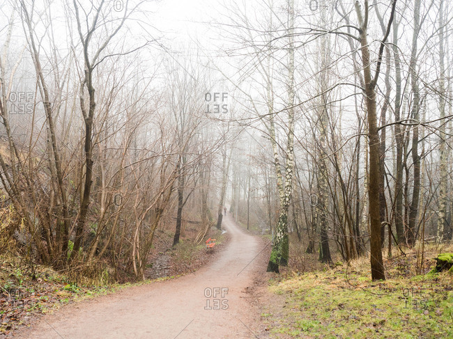 Autumn wooded trail in fog