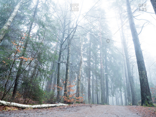 Autumn wooded path in fog