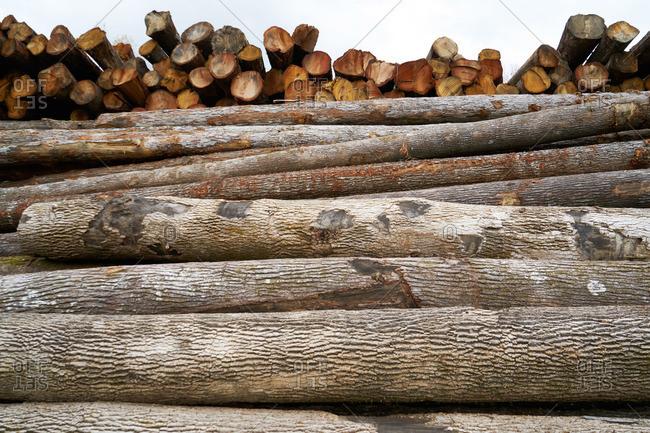 Large stacks of fresh cut trees